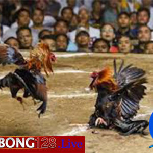 Sabung Ayam Bank Danamon